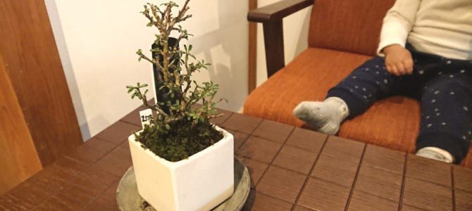 「和気藹々のごゆるり空間」町家盆栽Cafe コトノハ カフェラテ